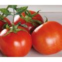 Tomate Gourmet